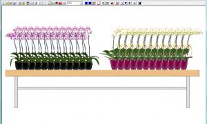 plant plano